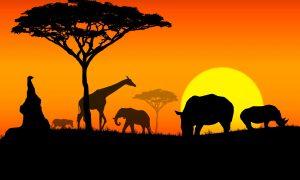 Vacanta in Africa de Sud la doar 634 euro/p (zboruri + 12 nopti de cazare)