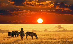 Zboruri din Bucuresti catre Africa: Etiopia (278 euro/p) si Uganda (298 euro/p)