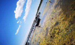 De ce sa vizitezi Delta Dunarii